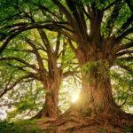 arbre-calcul-carbone-voyages-interieurs